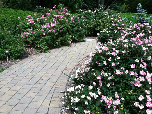In 2007 The Foundation Partnership With Columbus Recreation Parks Was Instrumental Creating Northernmost Earth Kind Rose Garden United